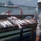 samfish9