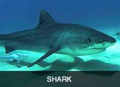 Shark Sidebar